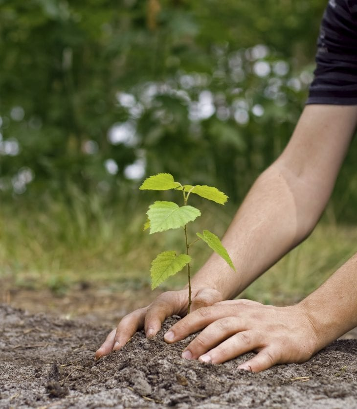 image of hands planting a seedling in the ground