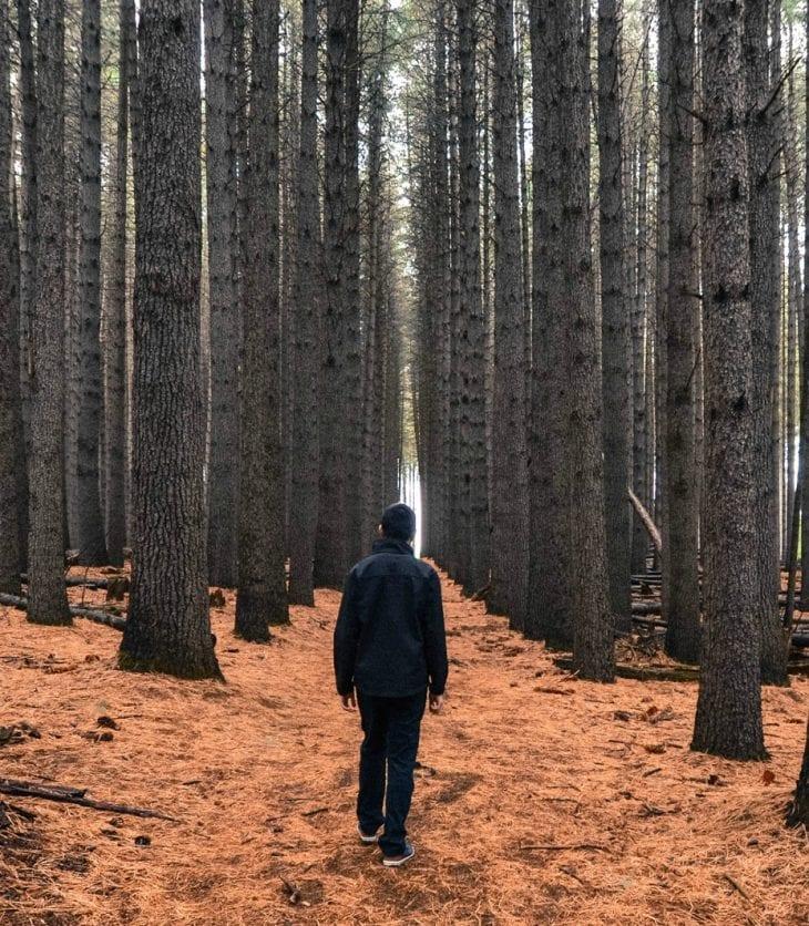 Man walking in the Sugar Pines at Batlow